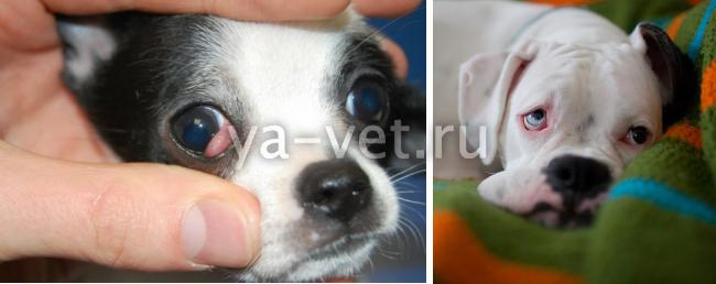 ветеринар офтальмолог москва