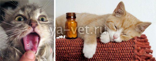 как лечить кошку при вирусном заболевании