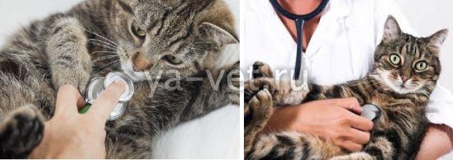 вирусные заболевания у кошек симптомы и лечение