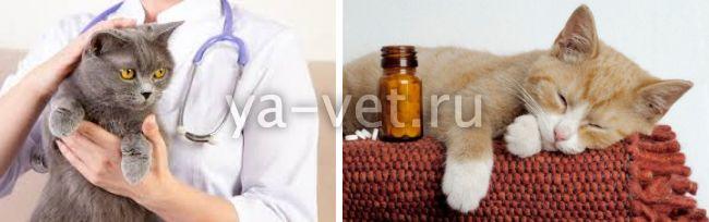 признаки пневмонии у кошек