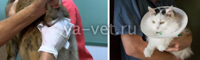воспаление параанальных желез у кошек симптомы
