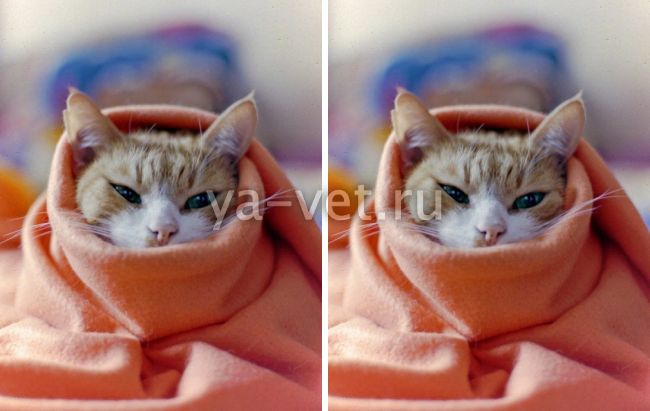 заболевания котят