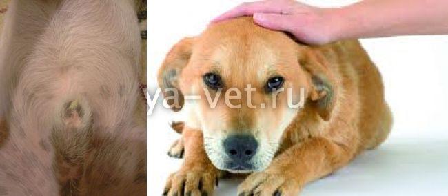 выделения у собаки