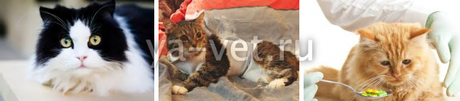 опухоли у кошек на животе лечение