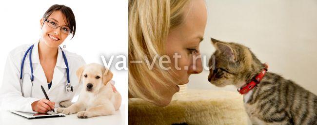 чем поможет консультация у ветеринара