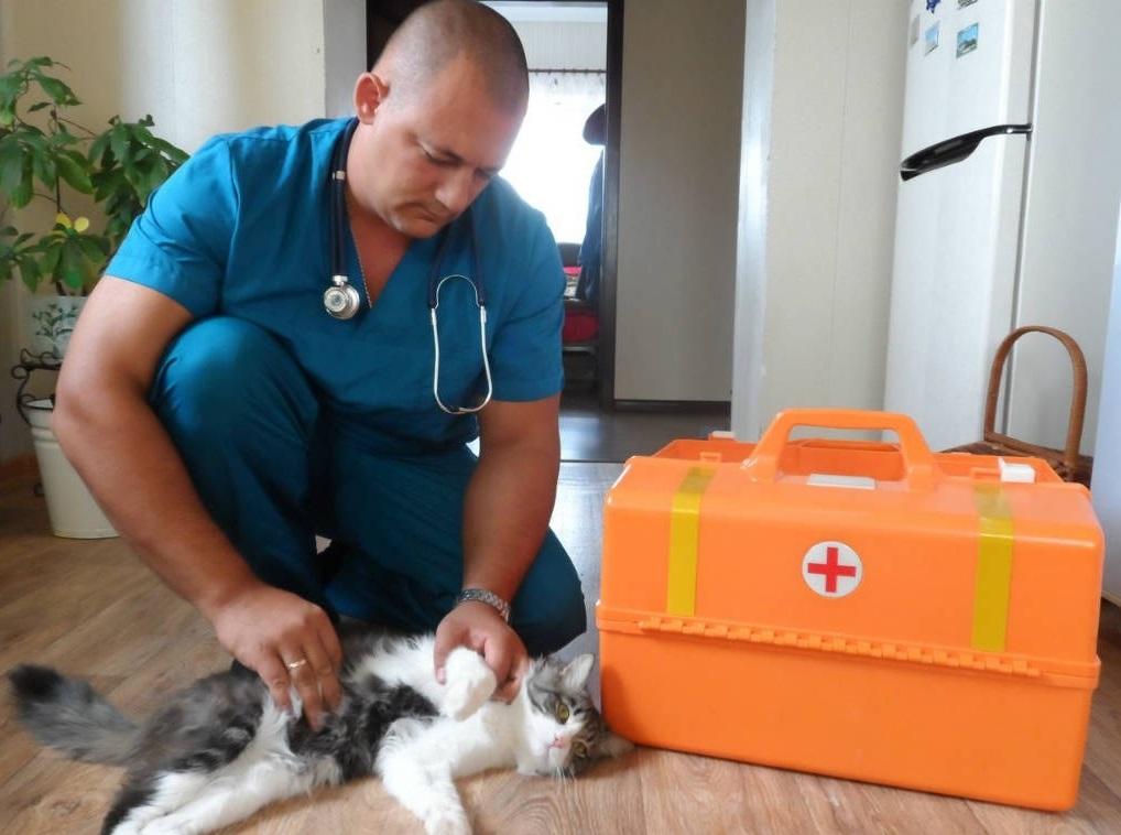 Ветеринар в Марьино