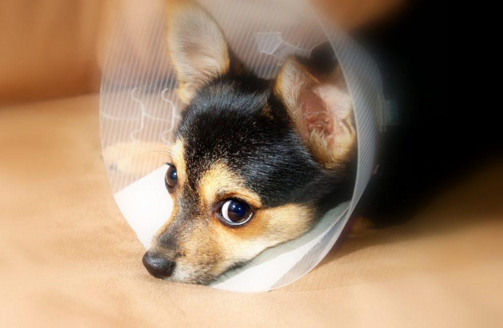 Уретростомия собаки